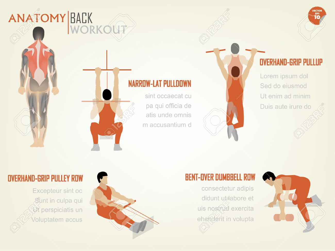 Beautiful Design Info Graphic Of Abdominal Back Workout Consist