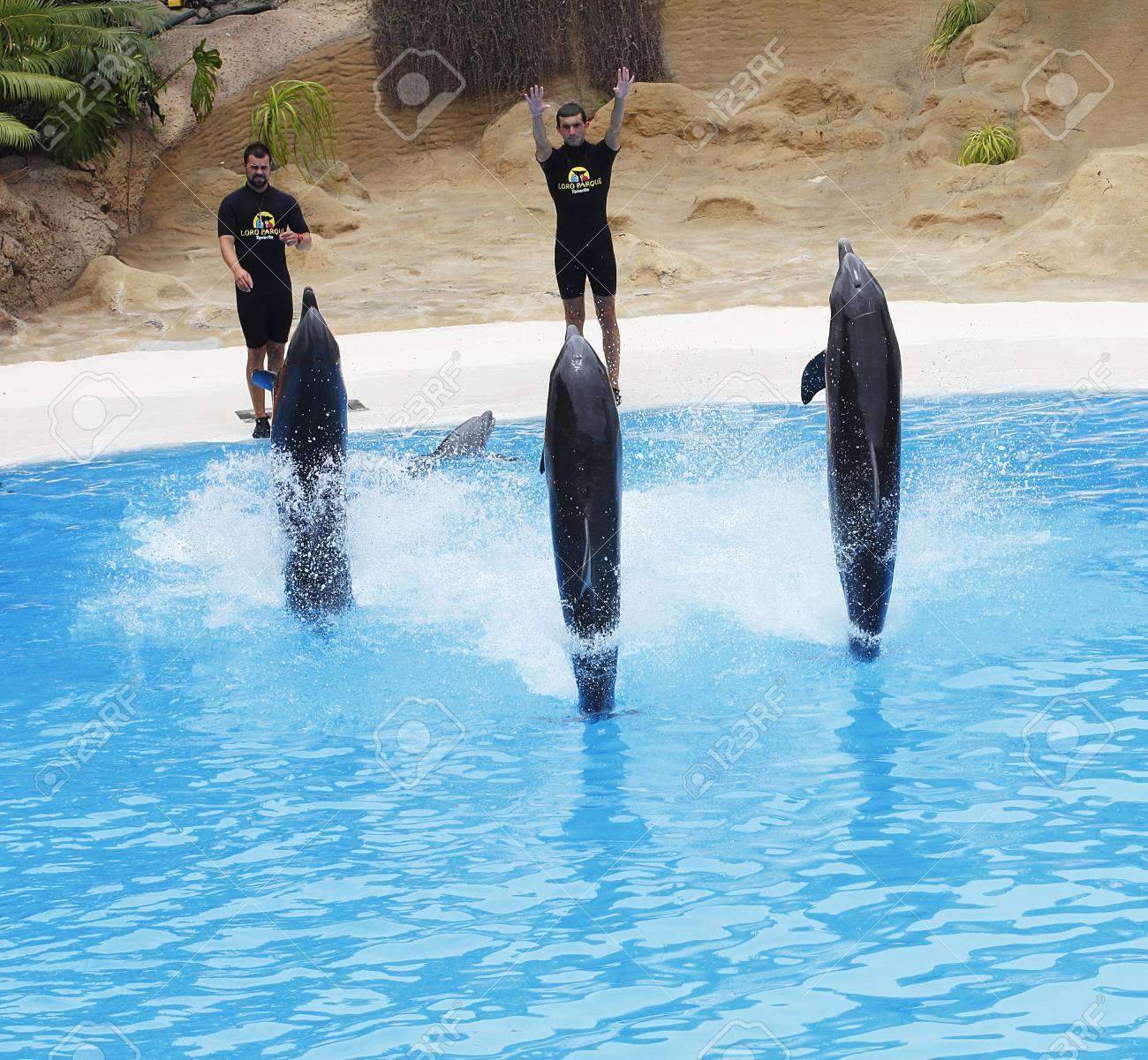 PUERTO DE LA CRUZ, TENERIFE - JULY 4: Dolphin show in the Loro Parque, which is now Tenerife's largest man made attraction with europe's biggest dolphin pool. July 4 2012 Puerto De La Cruz, Tenerife Stock Photo - 14756036