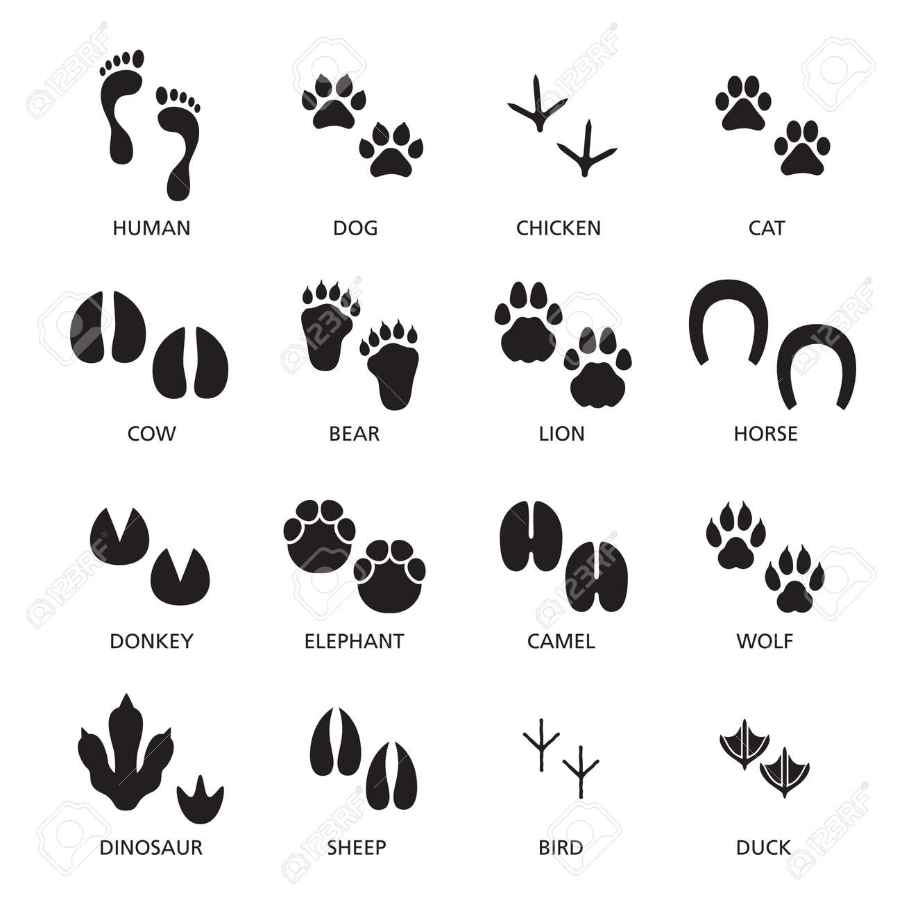 Vector set of footprint of different animals and human. - 165885043