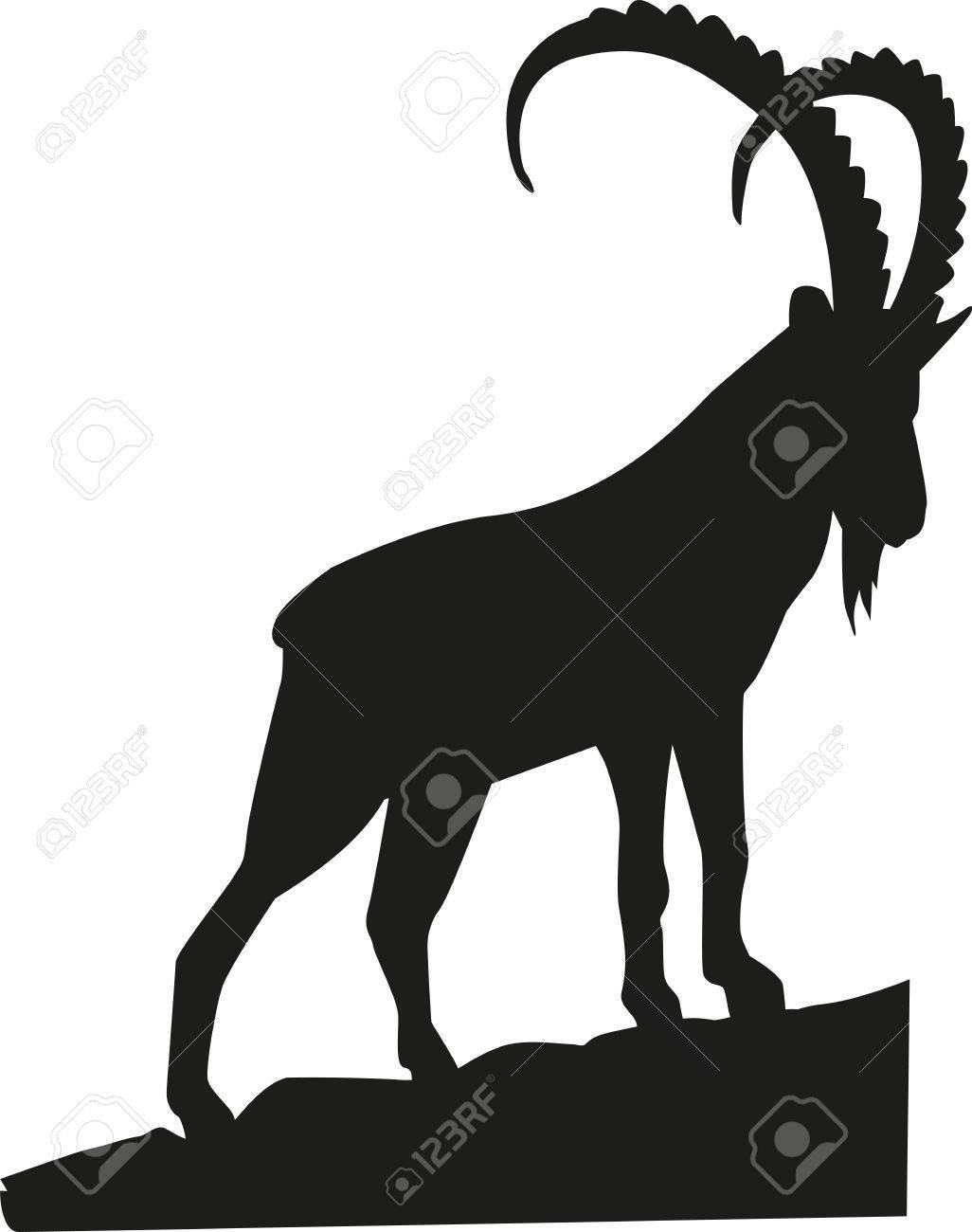 Ibex on the rock - 50323978