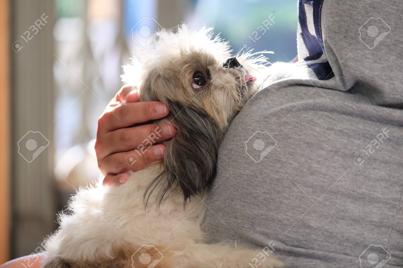 Asian Pregnant Woman Holding A Shih Tzu Dog Stock Photo Picture And