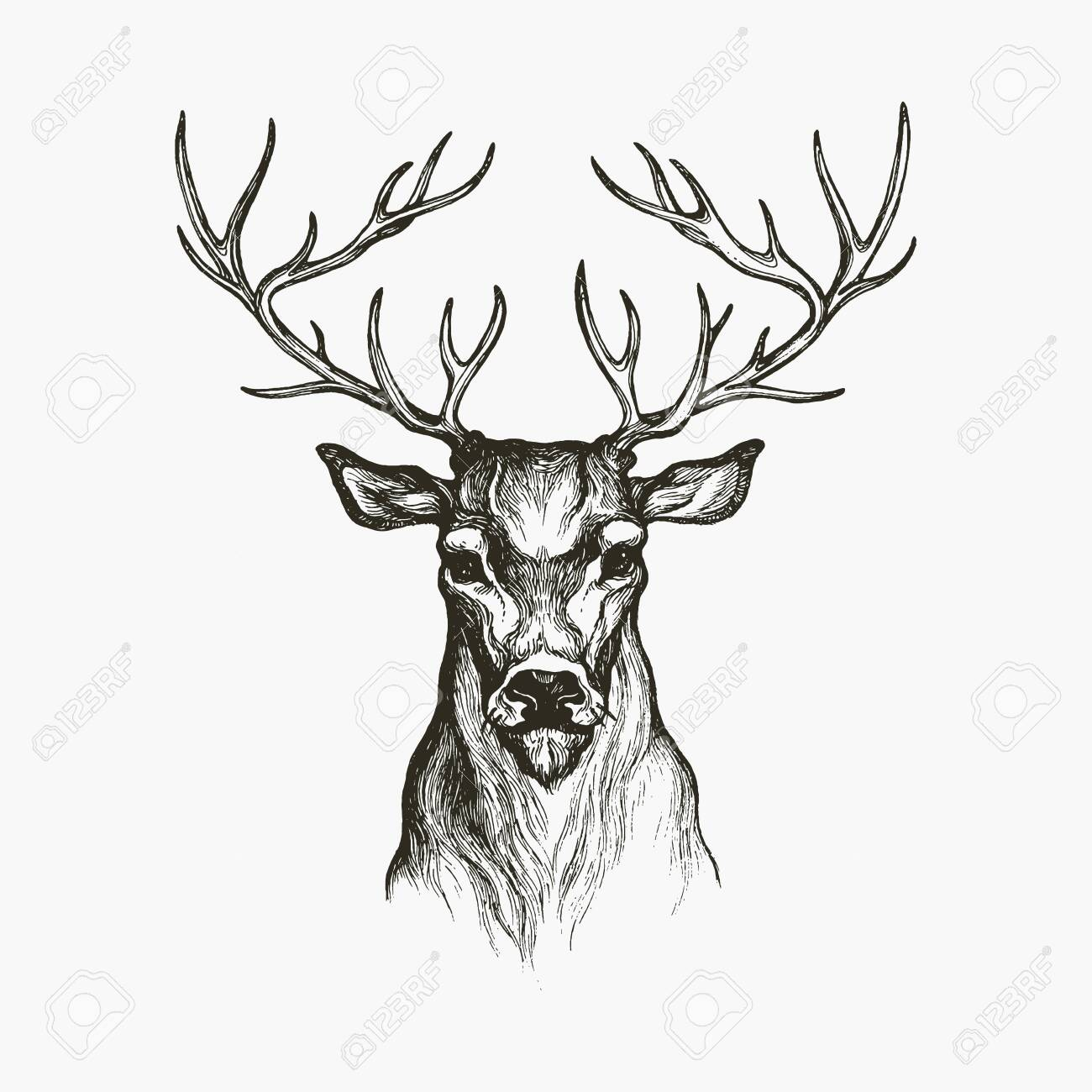Hand Drawn Deer. Deer illustration. Hand drawn animal - 135478546