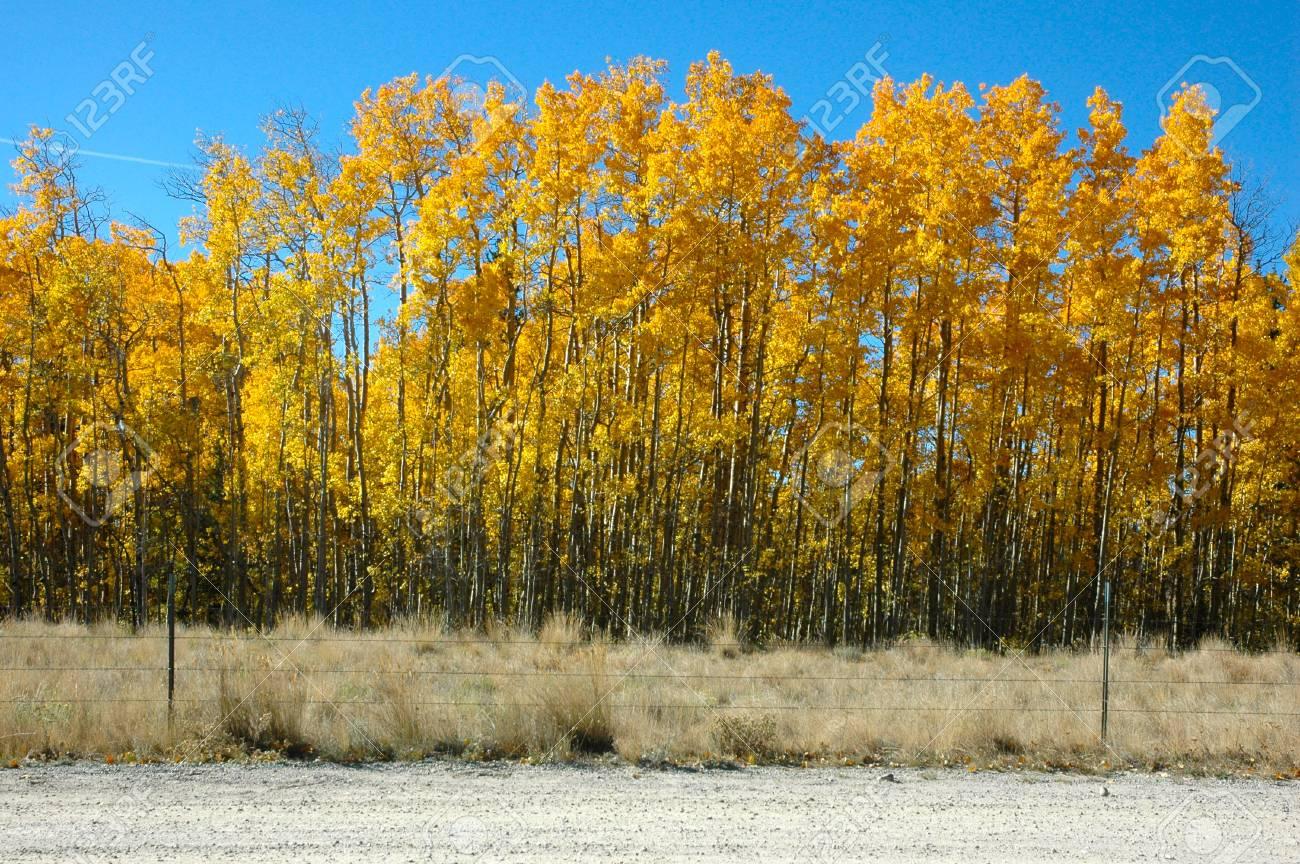 0bac9c08ba10 Archivio Fotografico - Fila di alberi di strada provinciale