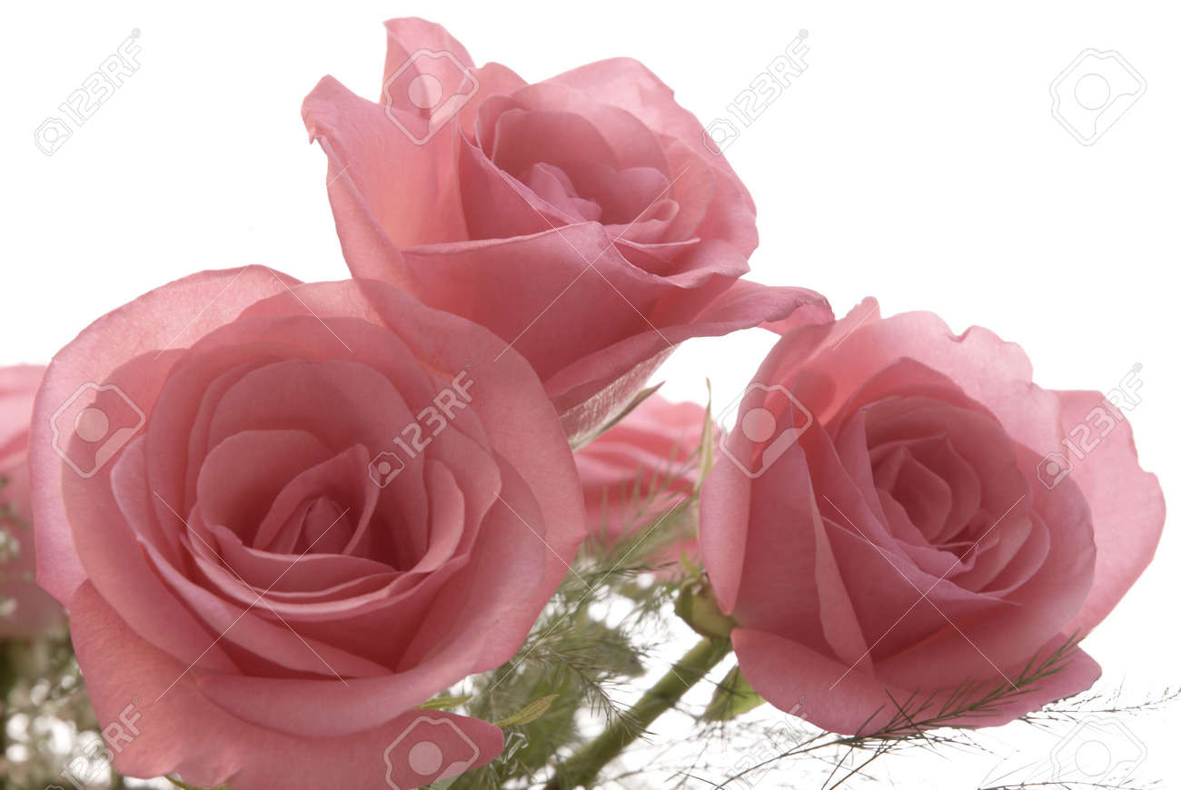 A bouquet of fresh pink roses isolated against a white background. Stock Photo - 794915