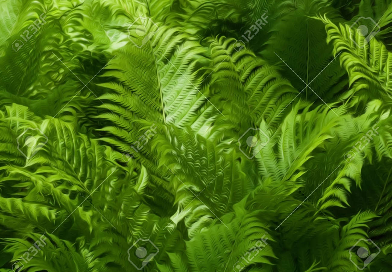 Beautiful green ferns with sunlight hitting them This photo