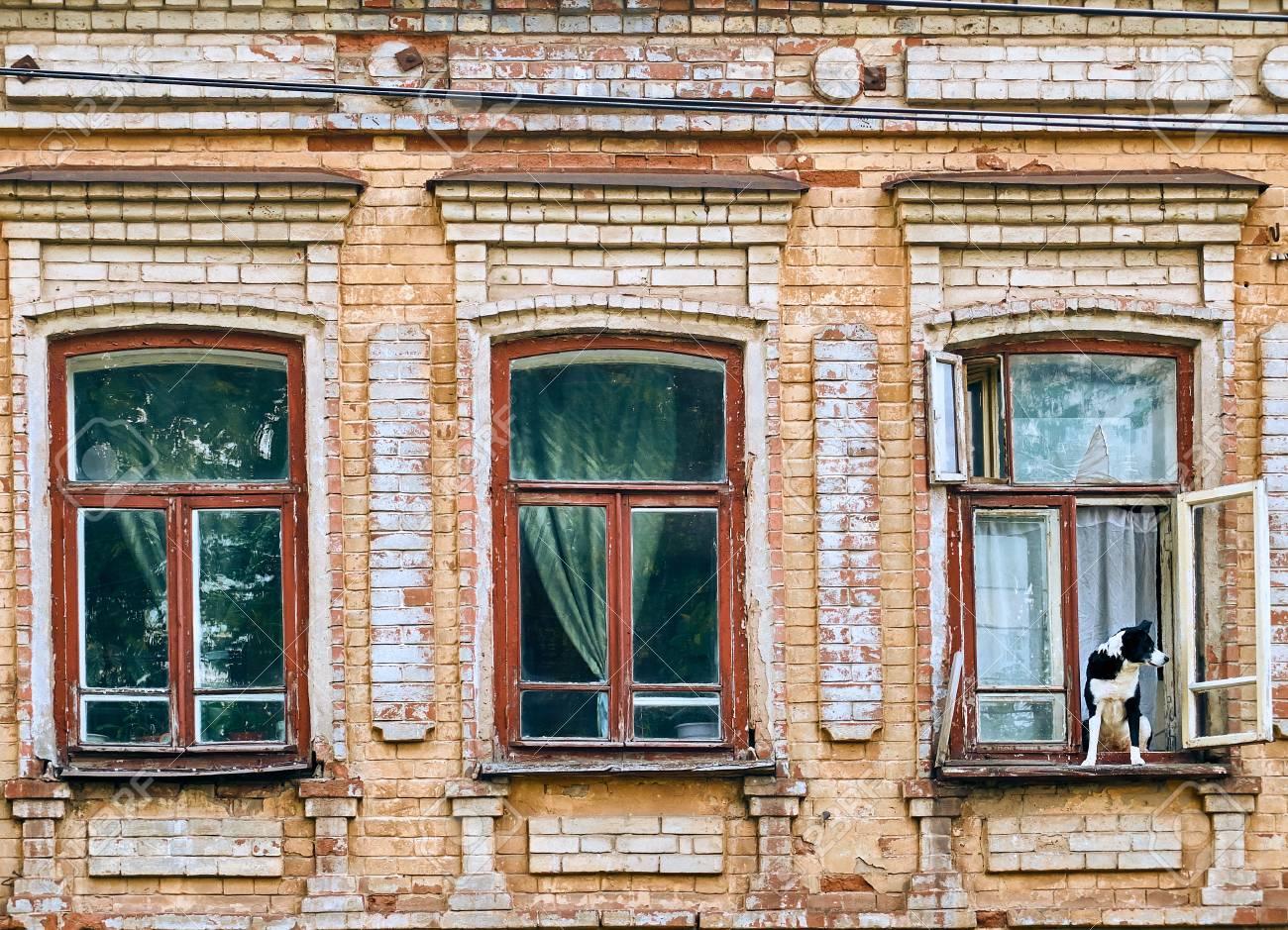 Grand Chien Assis Sur Le Rebord De La Fenêtre Dans Le Vieux Bâtiment Historique Regardant à Lextérieur Lune Des Trois Fenêtres En Bois Prêts à Fuir