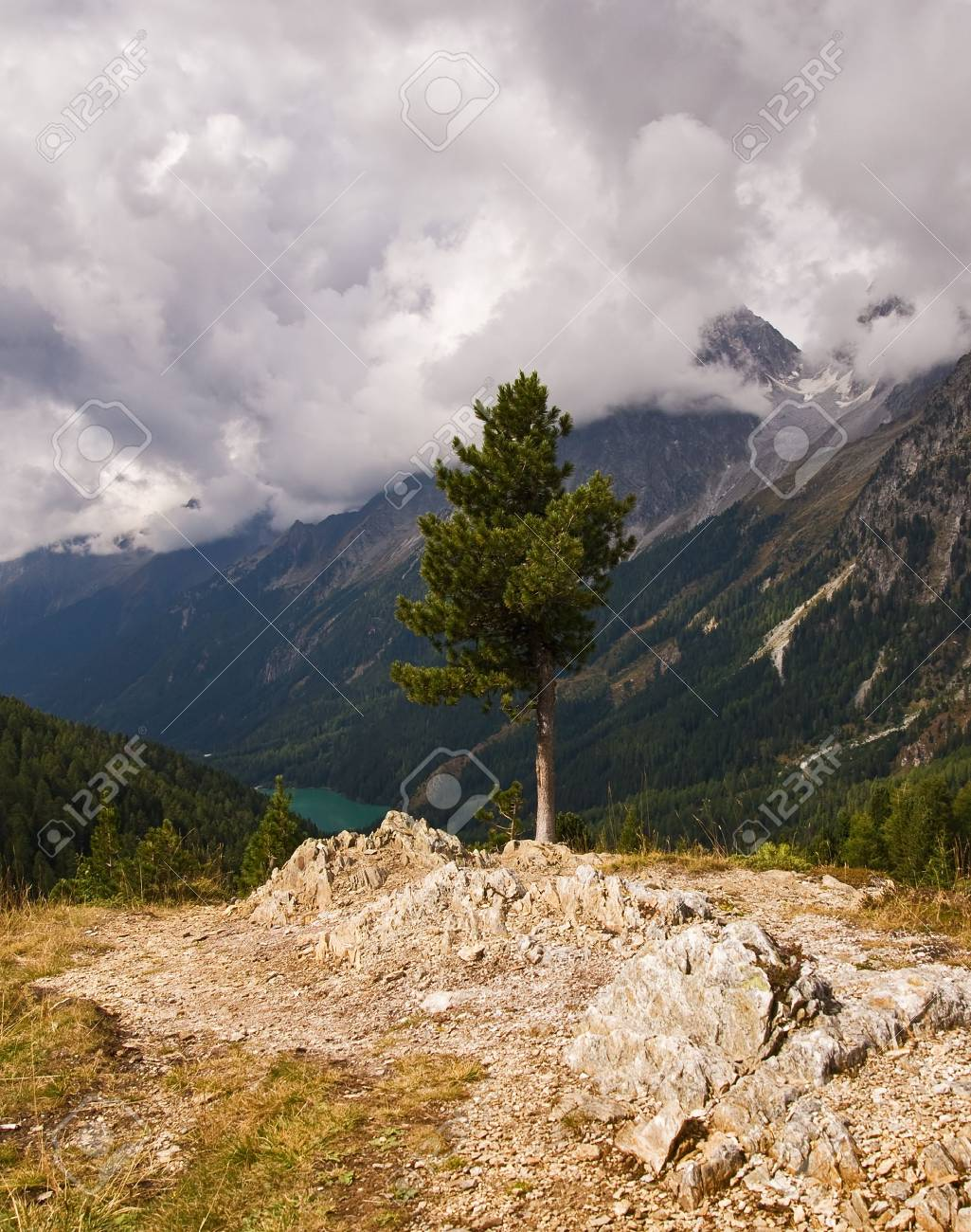 Austrian Alps panoramic view with tree on front side, summer Stock Photo - 8078948