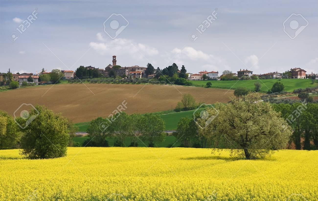 Italian Farm Landscape With Yellow Flowers Field Stock Photo