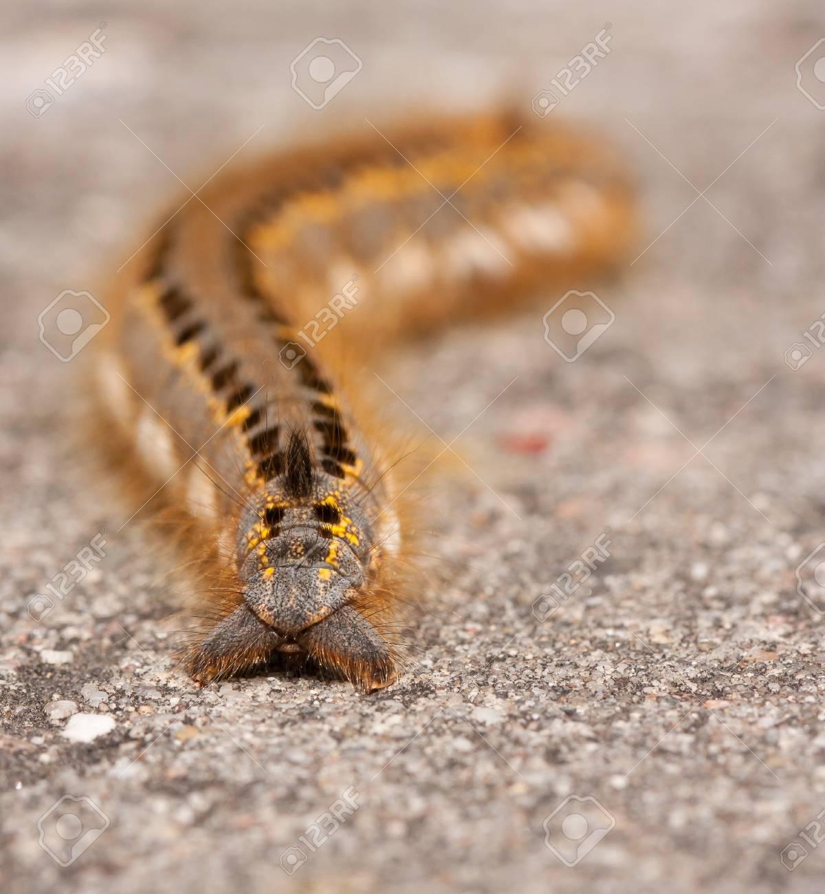 A caterpillar on a stone Stock Photo - 11694293