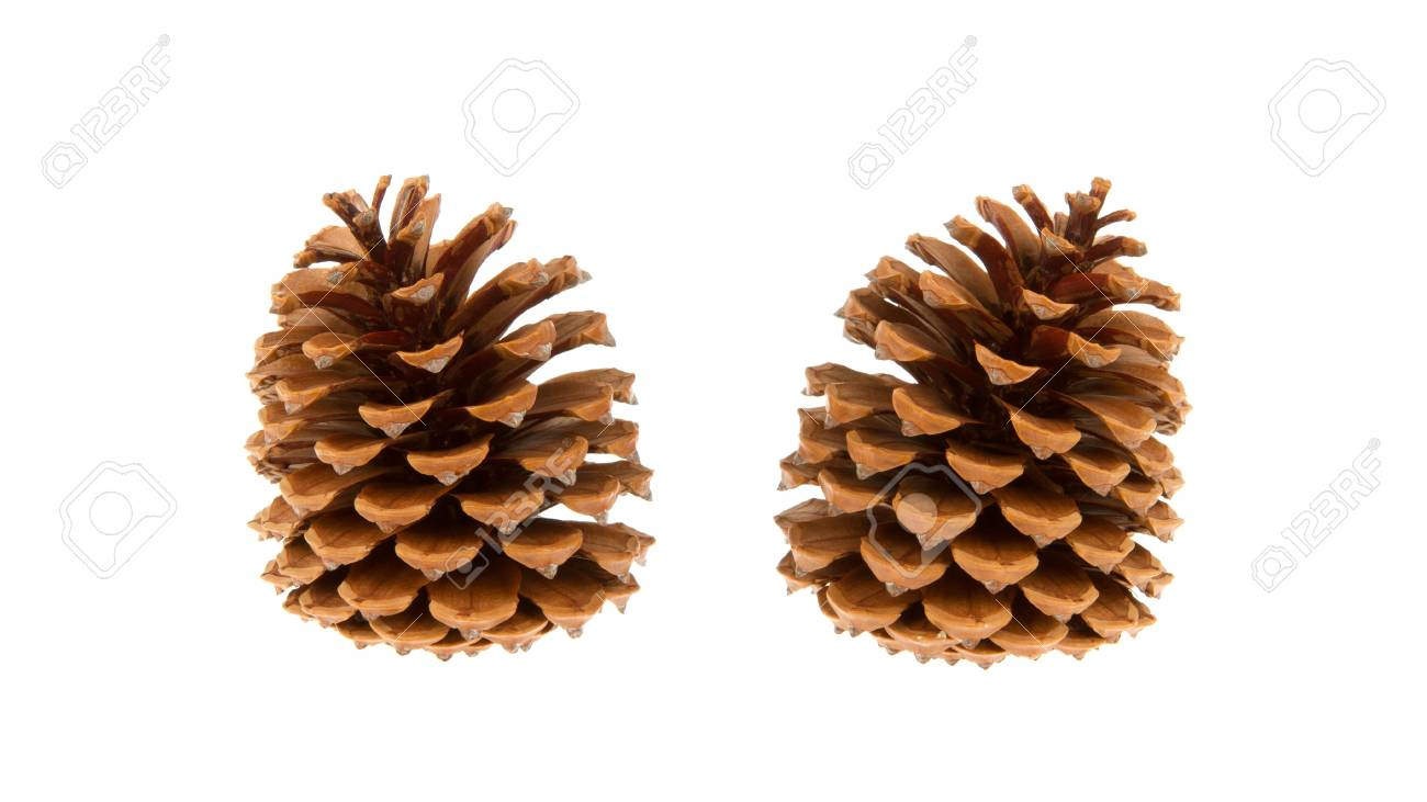 Two pine cones isolated on a white background Stock Photo - 14429436