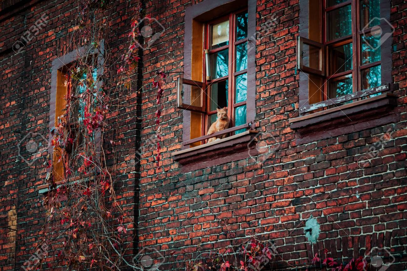 Lodz, Poland: Cat sitting in the window of an old nineteenth-century brick house in a Ksiezy Mlyn district - 147774039