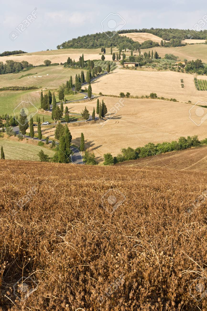Winding road with cypresses, Tuscany. Stock Photo - 11473994