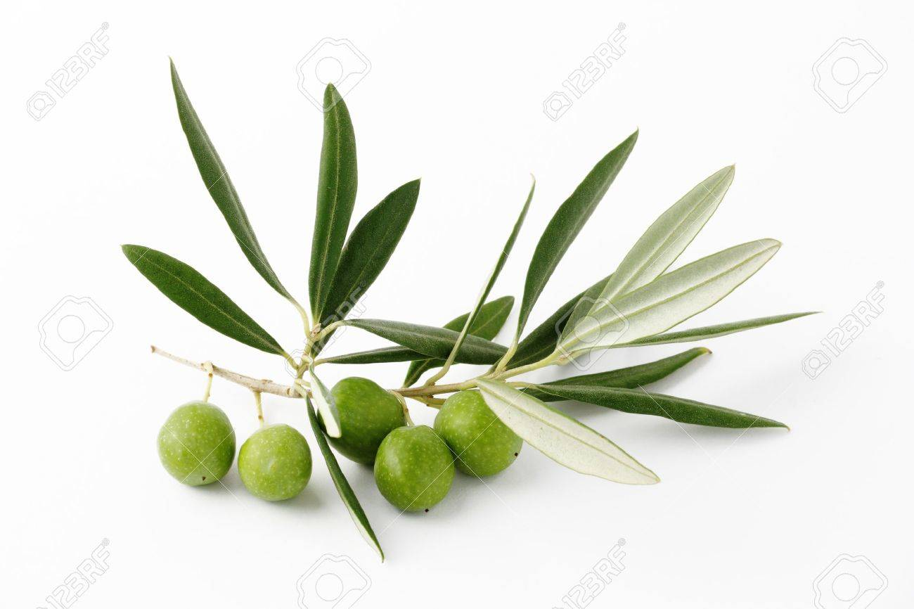 Olive green and twigs Stock Photo - 16506425