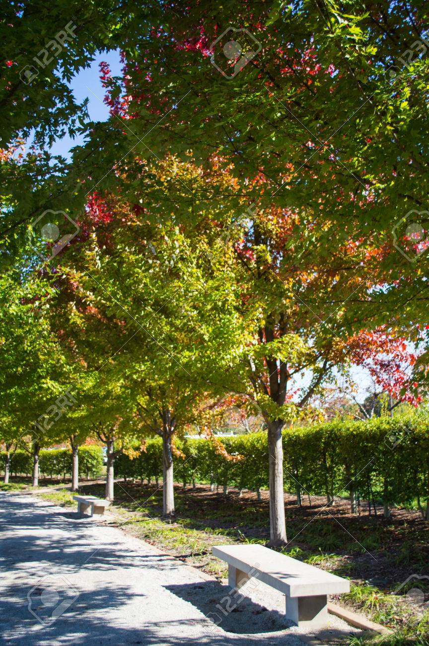 Trees Beginning To Turn Color In Neighborhood Park On Bright.. Stock ...