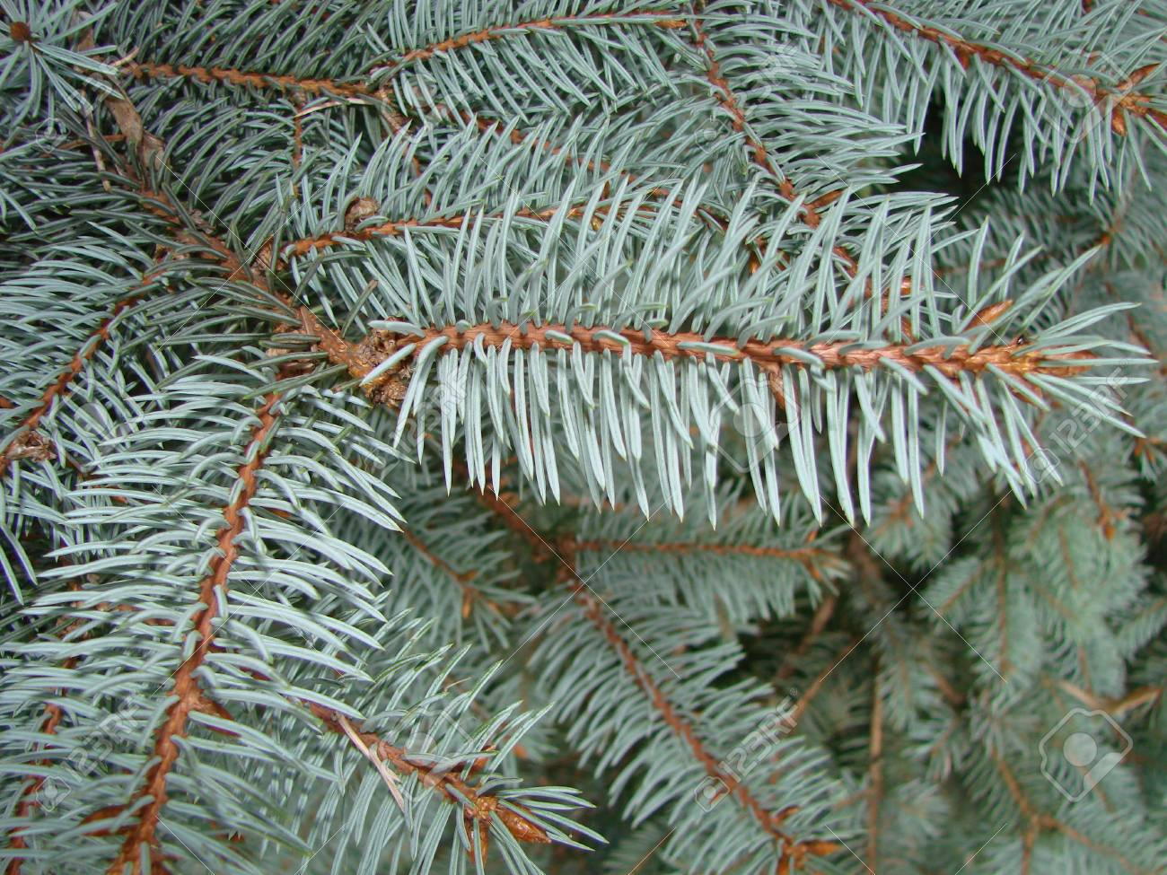 Natural Old Christmas Tree Wood Texture Pattern Or Christmas.. Stock ...