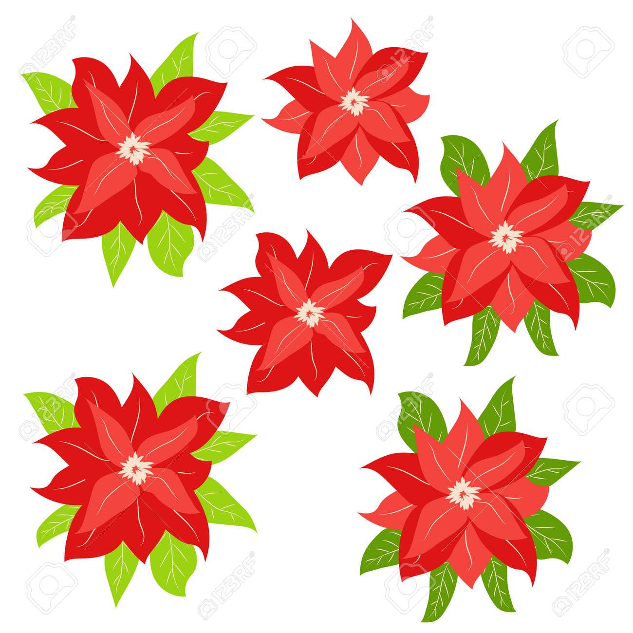 Hand drawn Poinsettia, Christmas Star. Christmas and holiday decor - 170465902