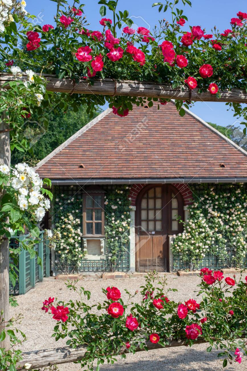 A Small House With Tile Roof Is Twined With White And Red Roses Roseraie Du Val De Marne Selective Focus Stock Photo Picture And Royalty Free Image Image 136352871