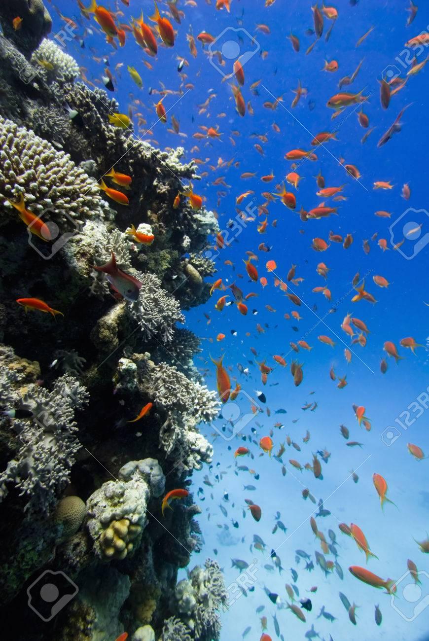 nackte madchen schwimmen mit fischen
