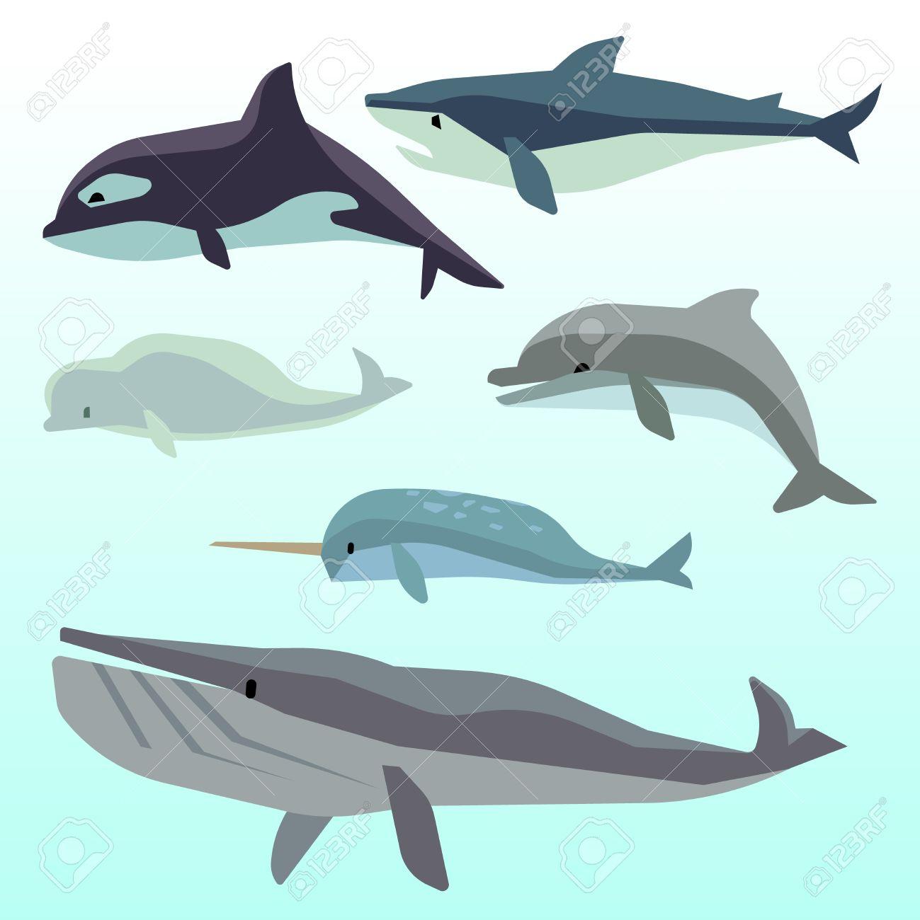 Ballenas Y Delfines, Mamíferos Marinos Bajo El Agua, Animales Del ...