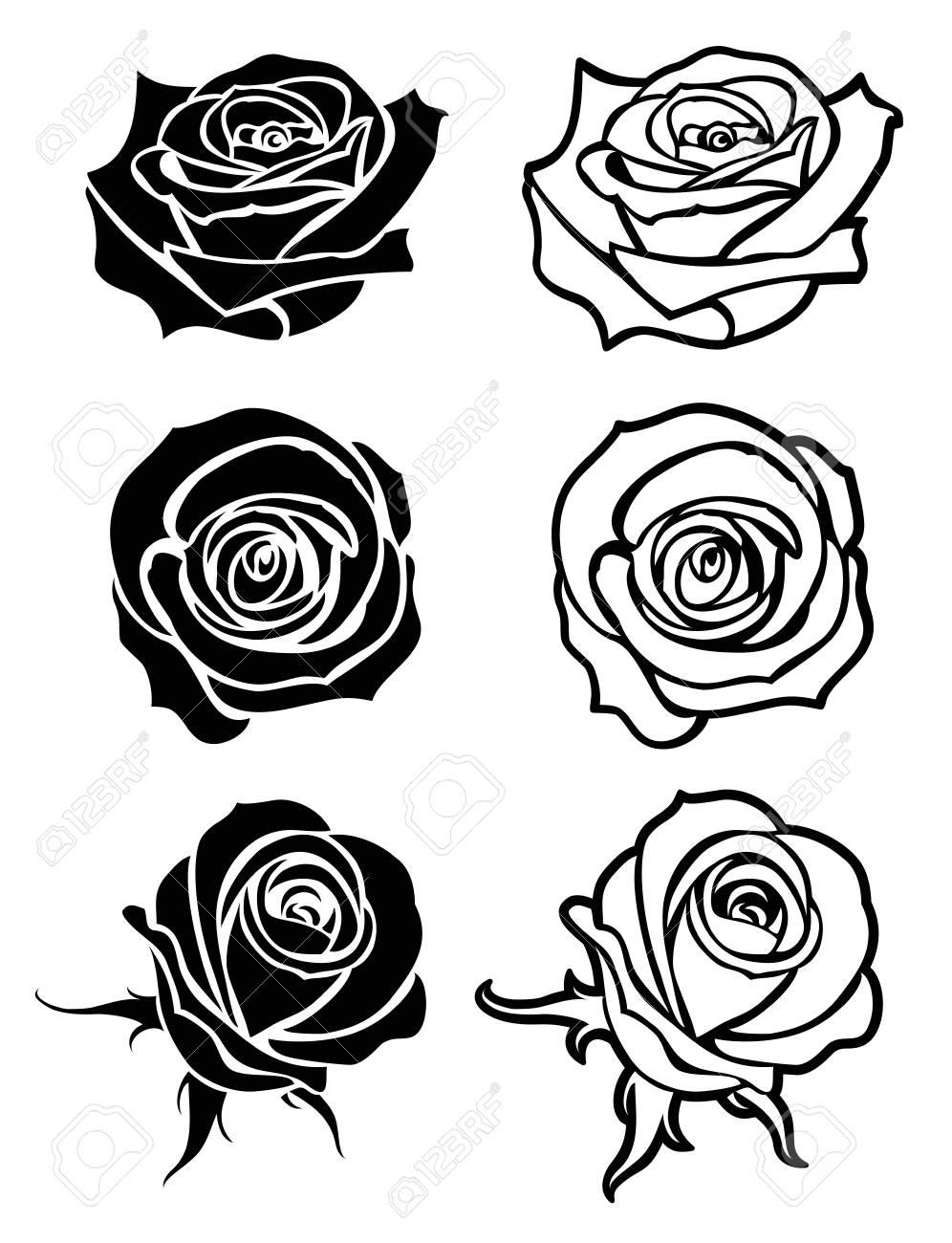Close Up Rose Vector Tattoo Royalty Free Cliparts Vectors And
