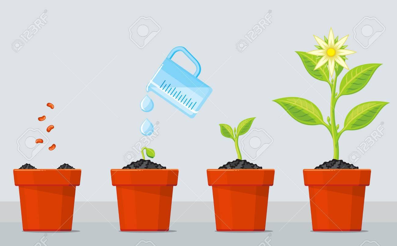 planta que crece etapas infografía línea de tiempo de proceso de