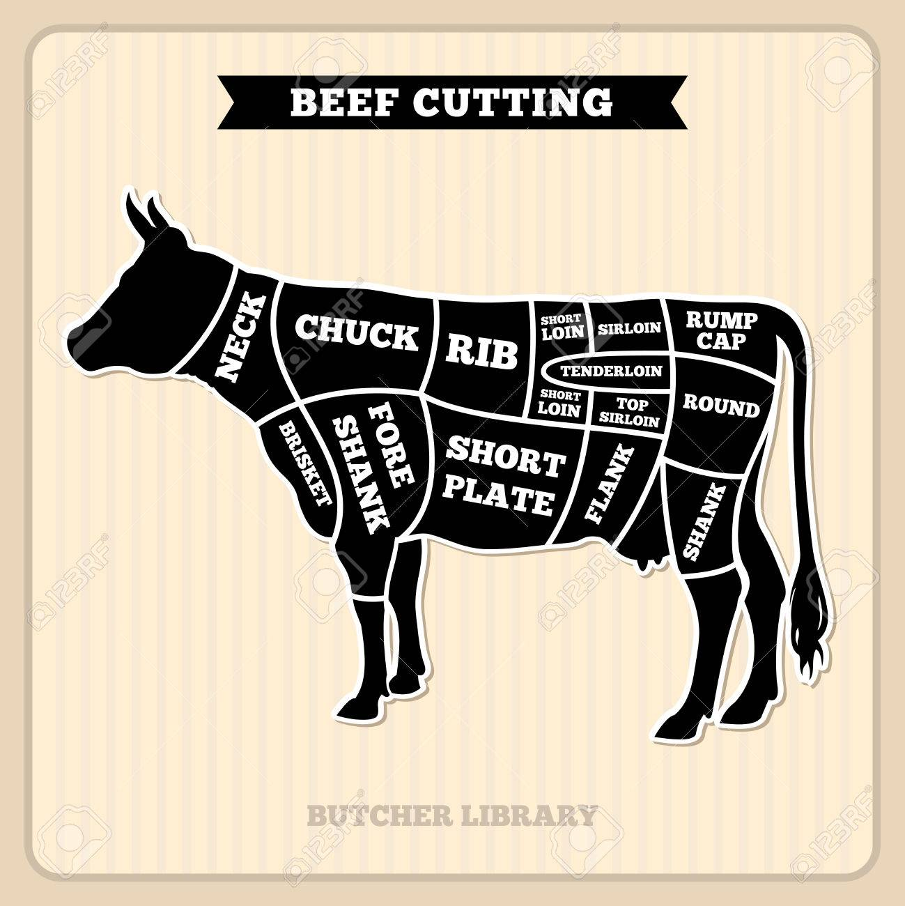 beef, cow cuts butcher vector diagram placard with section cow Cow Intestines Diagram beef, cow cuts butcher vector diagram placard with section cow, illustration of cow