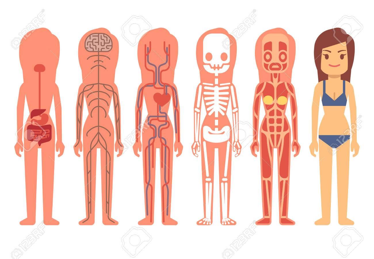 Médico De La Mujer Del Vector Anatomía Del Cuerpo. Esqueleto ...