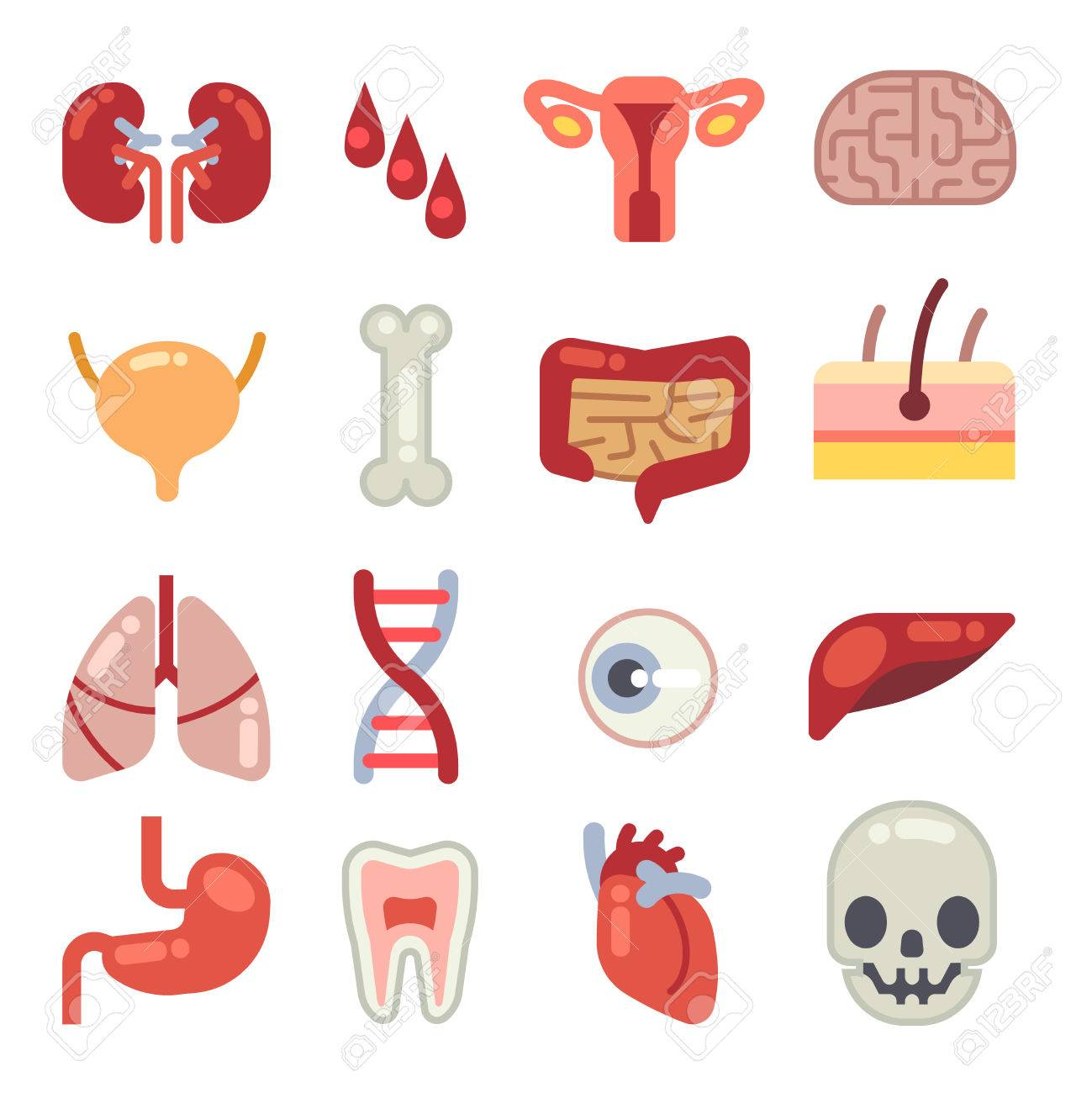 Human internal organs flat vector icons set of vital organs human internal organs flat vector icons set of vital organs illustration of brain ccuart Image collections