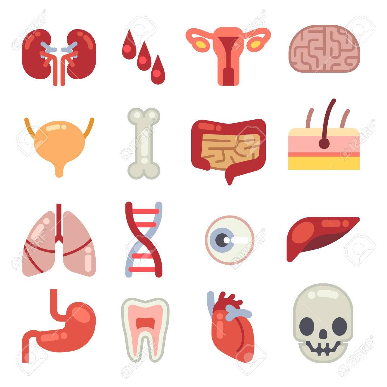 Iconos De Vector Plano De órganos Internos Humanos. Conjunto De ...