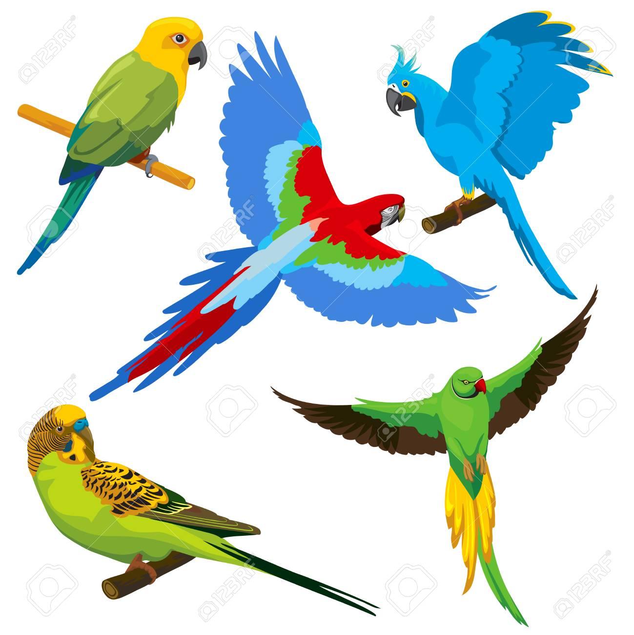 Perroquets De Dessin Anime Jeu De Vector Oiseaux Tropicaux