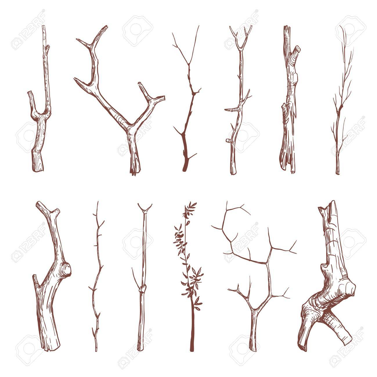 Hand Drawn Wood Twigs Wooden Sticks Tree Branches Vector Rustic Decoration Elements Set