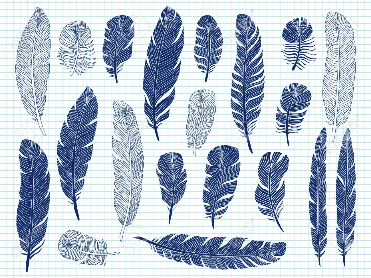Ballpoint Pen Drawing Of Bird Feathers Big Set On Notebook Background