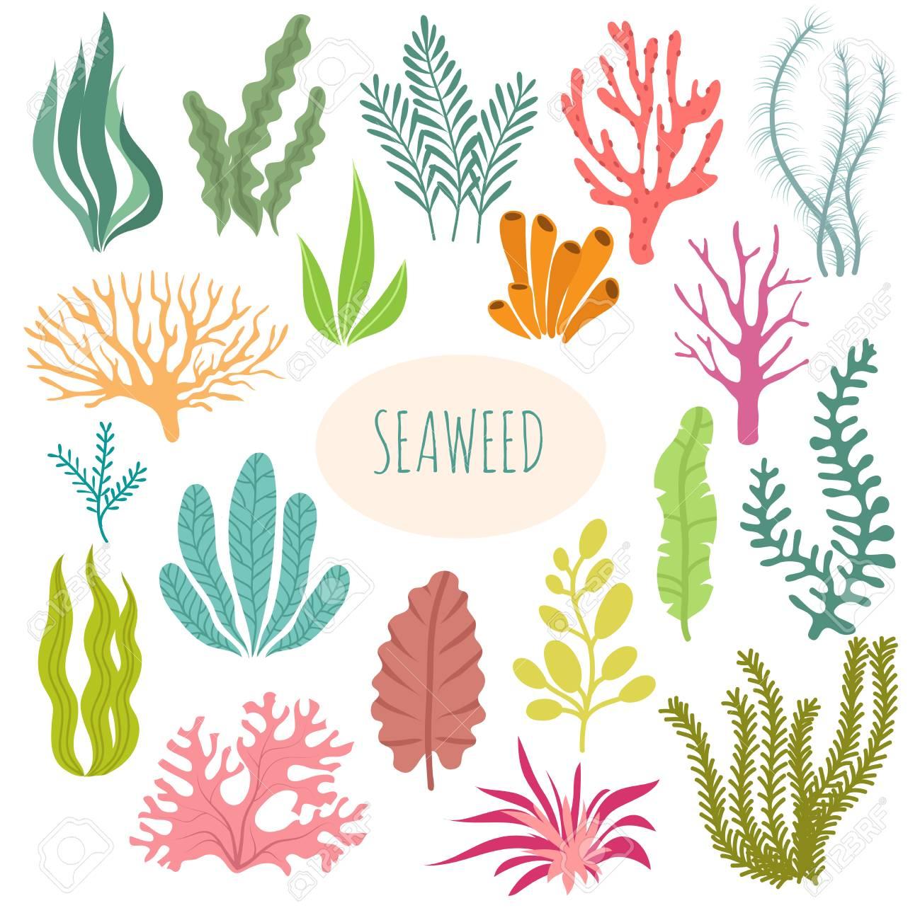 Seaweeds  Aquarium plants, underwater planting  Vector seaweed