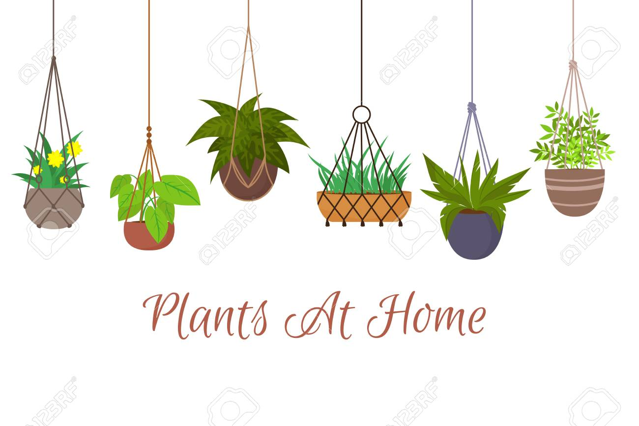 Indoor green plants in pots hanging on decorative macrame hangers vector set. Hanging plant in pot, decoration home illustration - 110271075