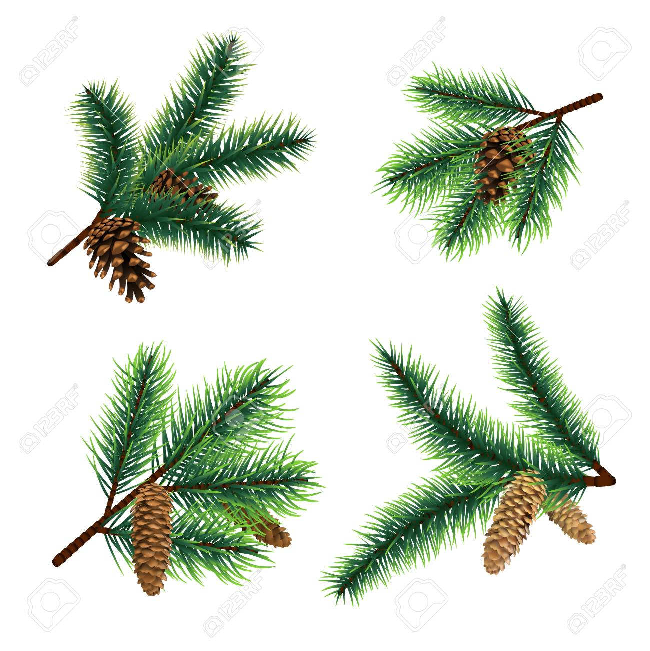 Fir Branch Christmas Tree Branches With Cones Pine Xmas Vector
