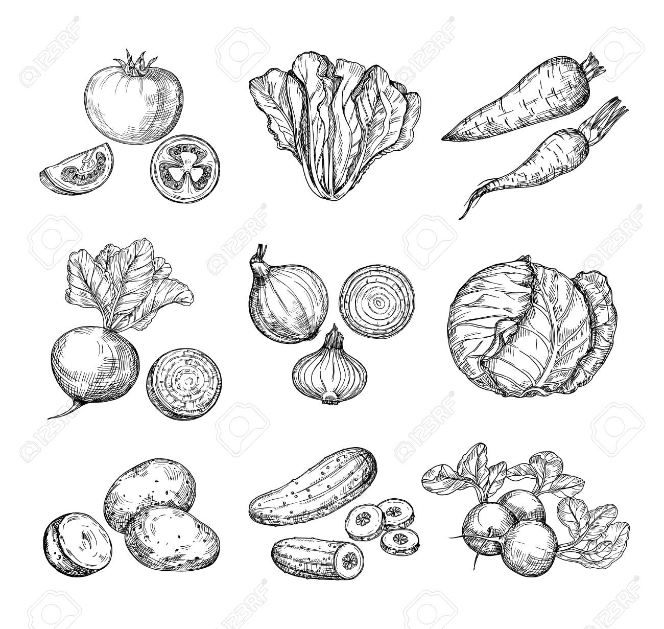 Sketch vegetables. Fresh tomato, cucumber and carrots, potatoes. Hand drawn onions, radish and cabbage. Garden vegetable vector set of tomato and potato, organic fresh food illustration - 128172690