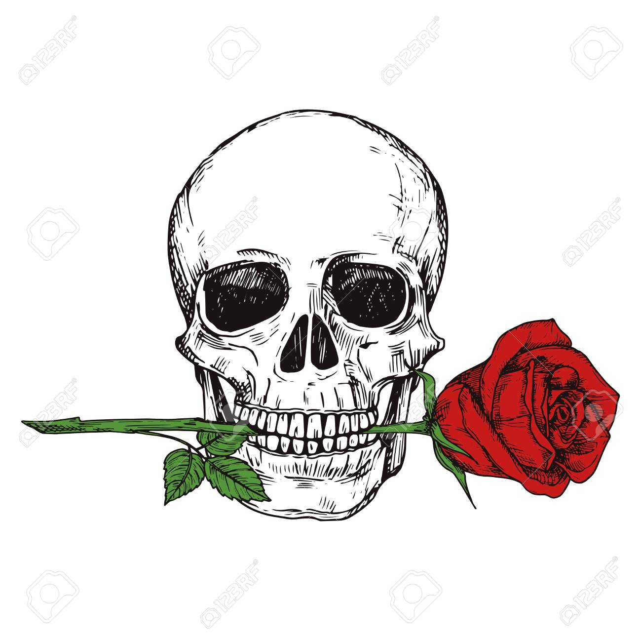 photograph about Skull Printable titled Hand drawn pleased human skull with purple rose - sketched skull printable..