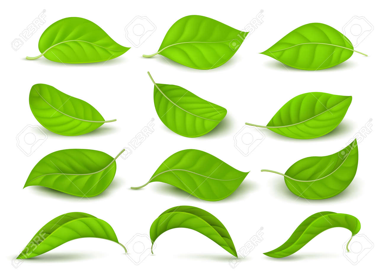 Realistic green tea leaves with water drops isolated on white vector set. Green tea leaf, natural freshness illustration - 166831246