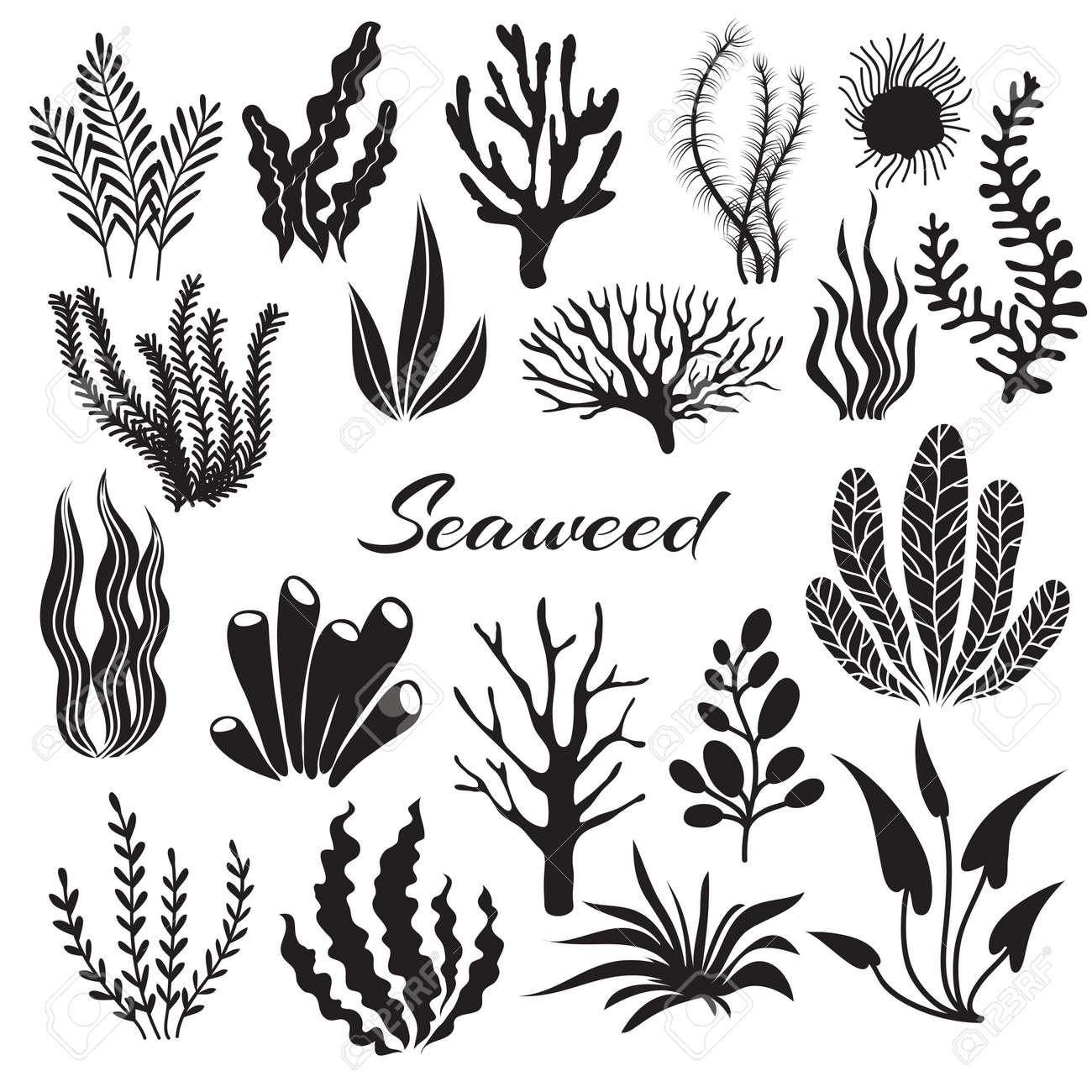Aquarium seaweeds. Underwater plants, ocean planting. Vector seaweed black silhouette isolated set. Sea weed black, underwater sea ocean plant illustration - 168189022
