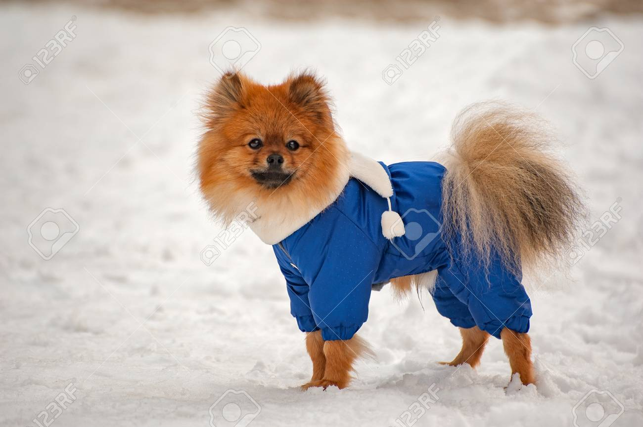 The Puppy In The Blue Sweater,dress Is Staying And Looking To ...