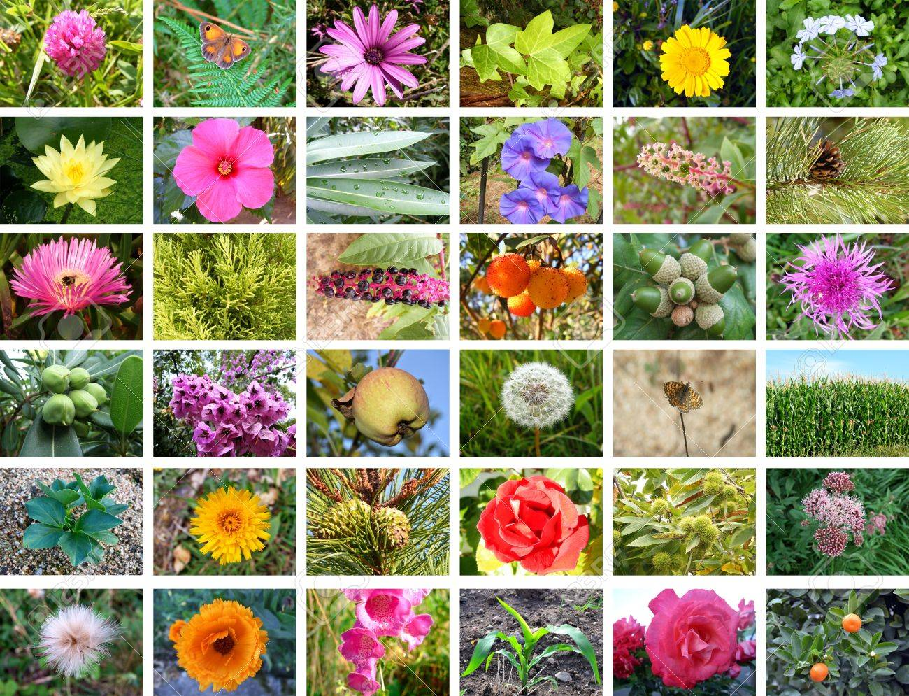Beautiful nature collection with flowers and plants Stock Photo - 12685260