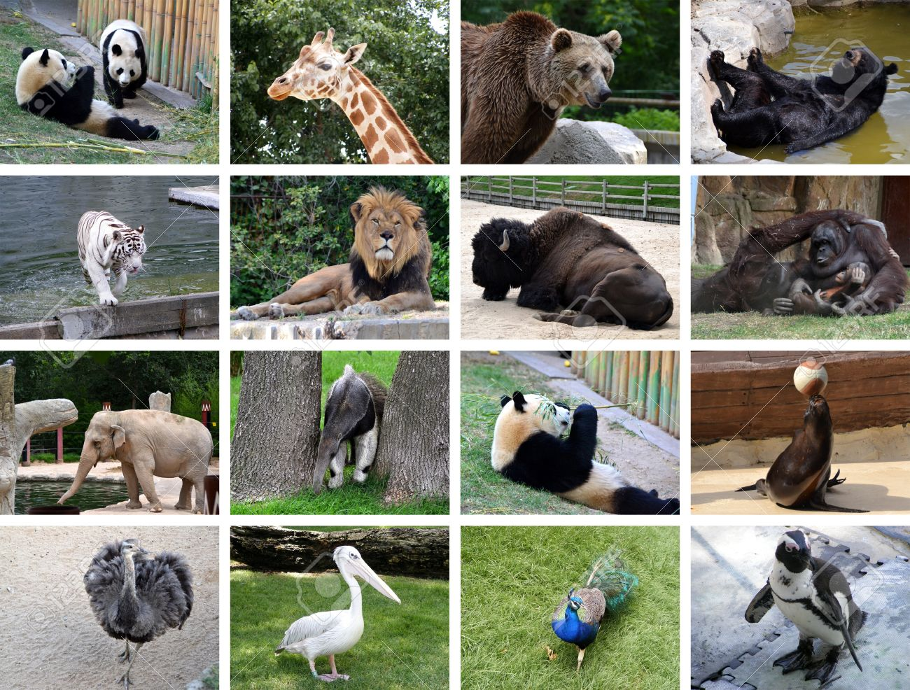 Collage Of Many Different Wild Animals Images Stock Photo