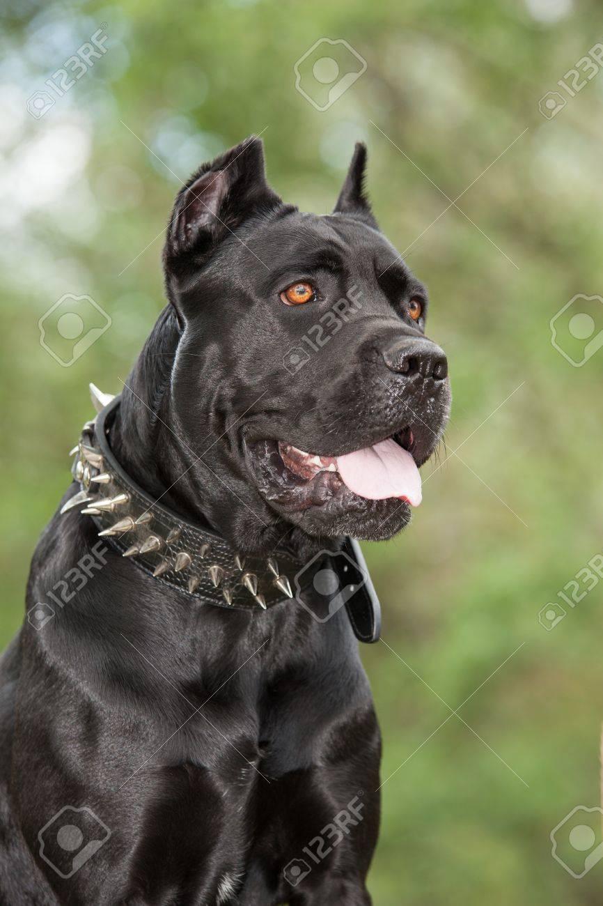 Perro Negro En El Fondo De Un árboles Verdes Y El Césped Raza Cane