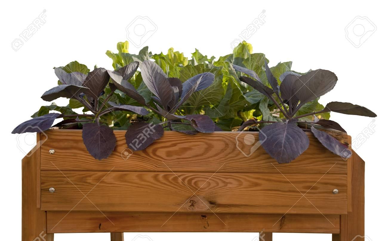 Jardín cultivo de verduras en servicio doméstico Foto de archivo - 13418977