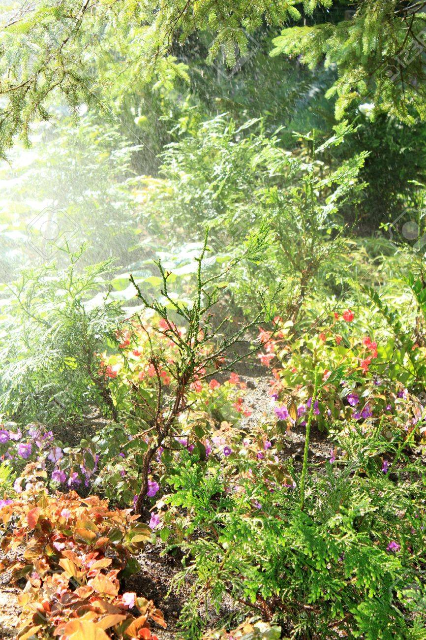 Tropical rain forest with a diverse range of plants and trees - 10056535