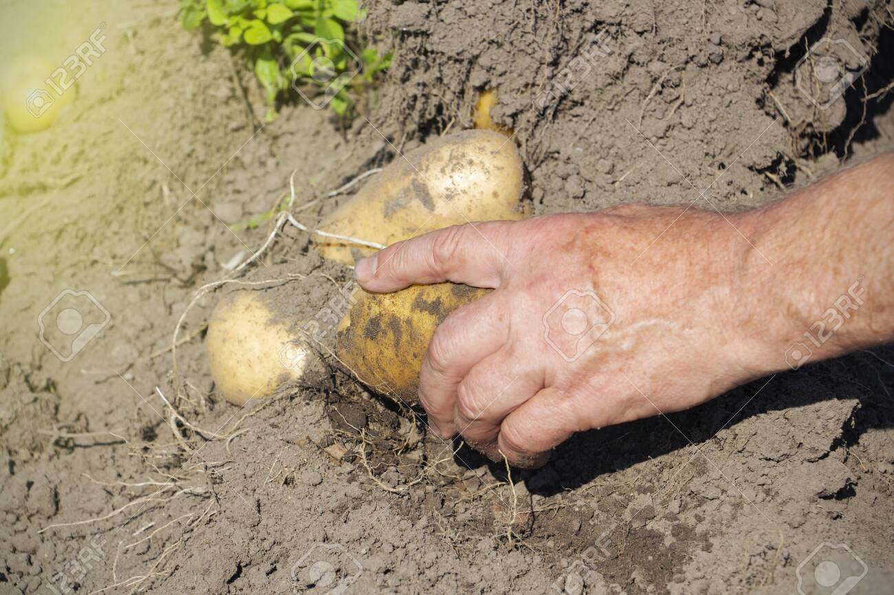 5 reasons to test your soils - AgroCares | 866x1300