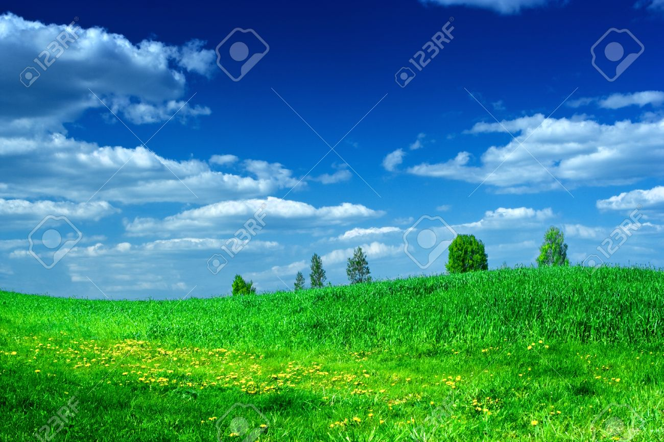 green meadow with beauty blue sky Stock Photo - 11506314