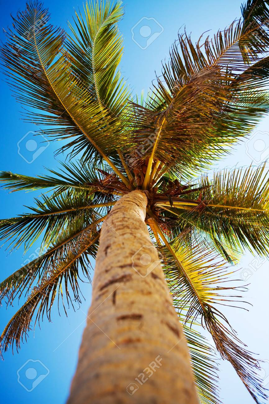 Palms and Caribbean sky Stock Photo - 6078618