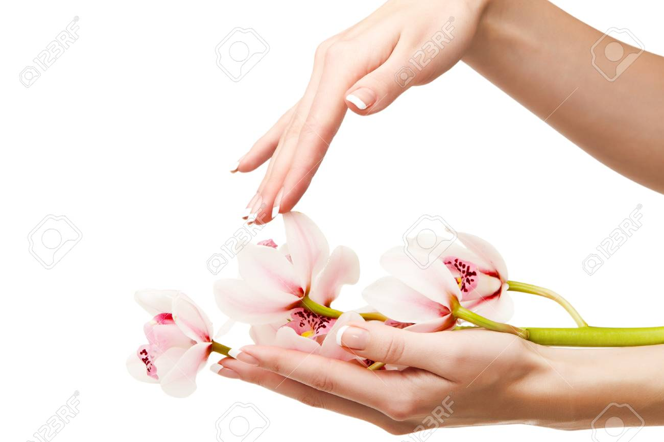 Hands and orchid over isolated white background Stock Photo - 6988290