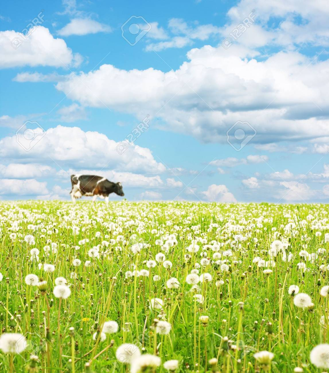 Cow walking on green meadow with green grass Stock Photo - 5573490